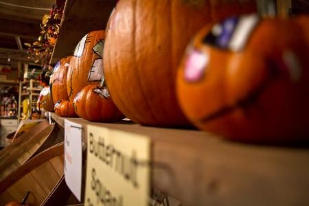 Carroll Pumpkins