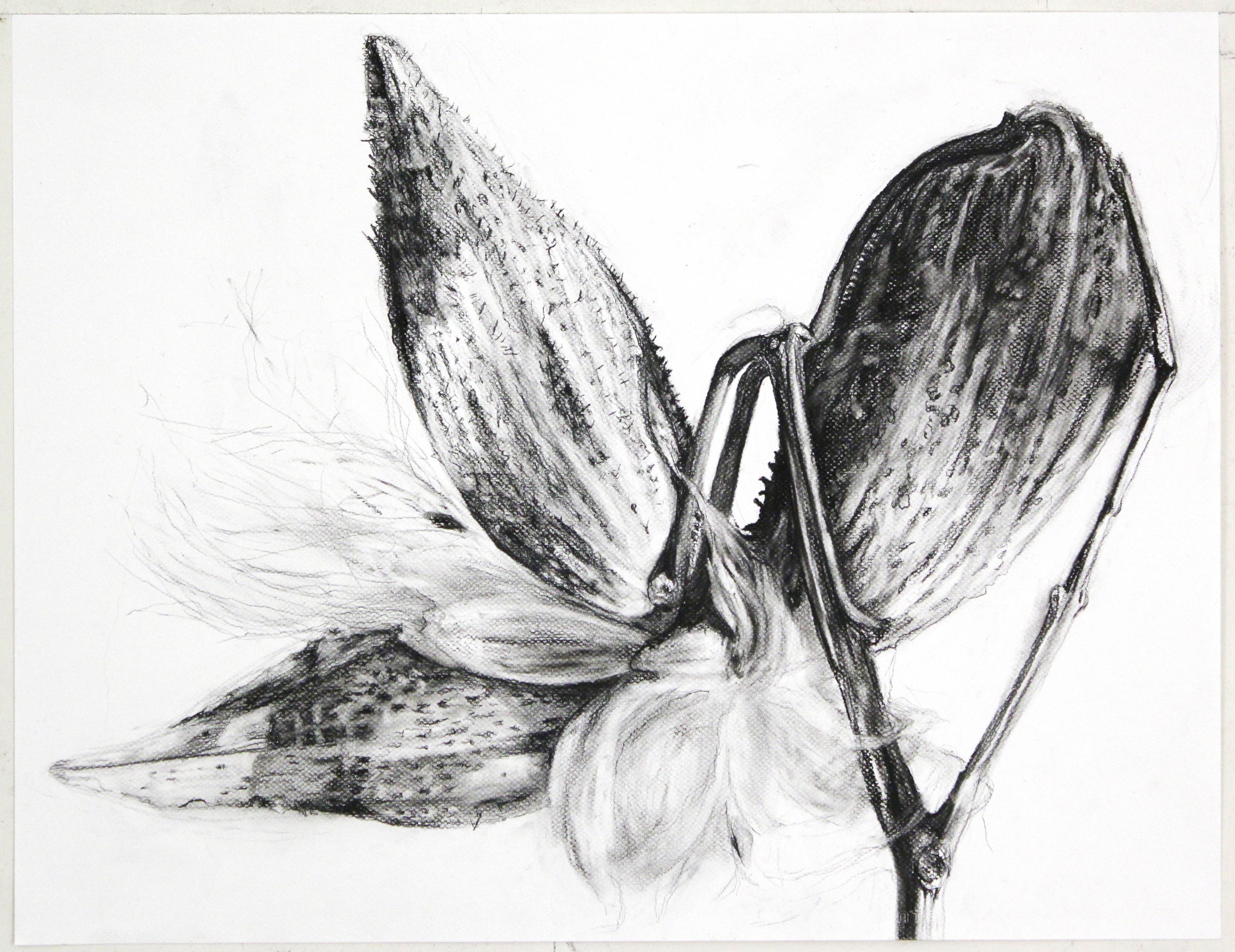 """Milkweed"" by Tara Shukla"