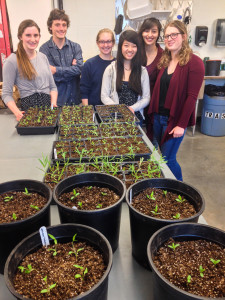 Students repotted plants that attract monarch butterflies in the Greenhouse on Tuesday. Contributed Photo.