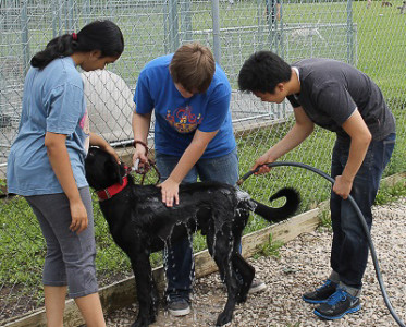 Student volunteers can work at PALS with the animals to walk and socialize them. Contributed photo.