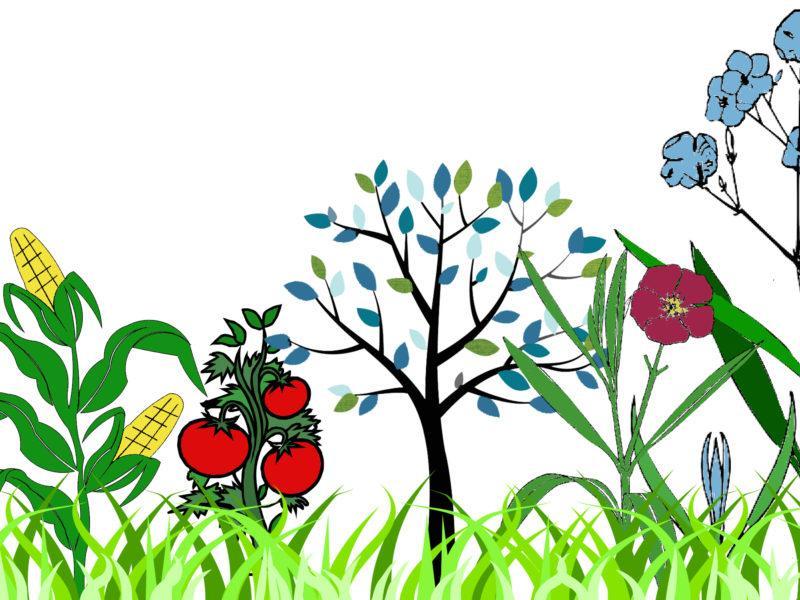 farm-garden-graphic